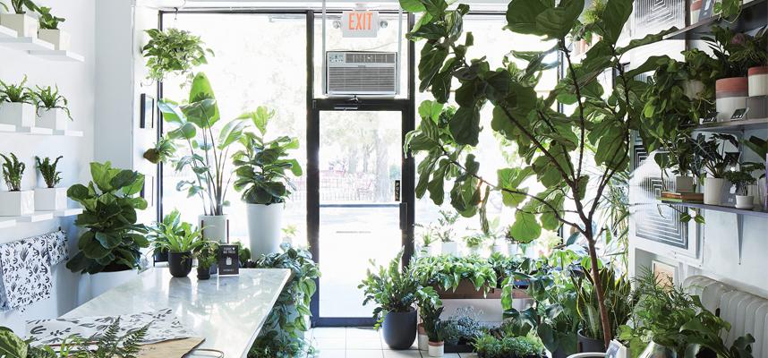Cách bố trí cây cảnh các vị trí quan trọng trong nhà để hút lộc