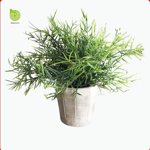 cỏ hương thảo