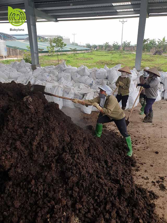 Bán phân bò ủ hoai tại Hà Nội
